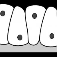 tissue-pseudostatified