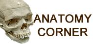 Anatomy Corner