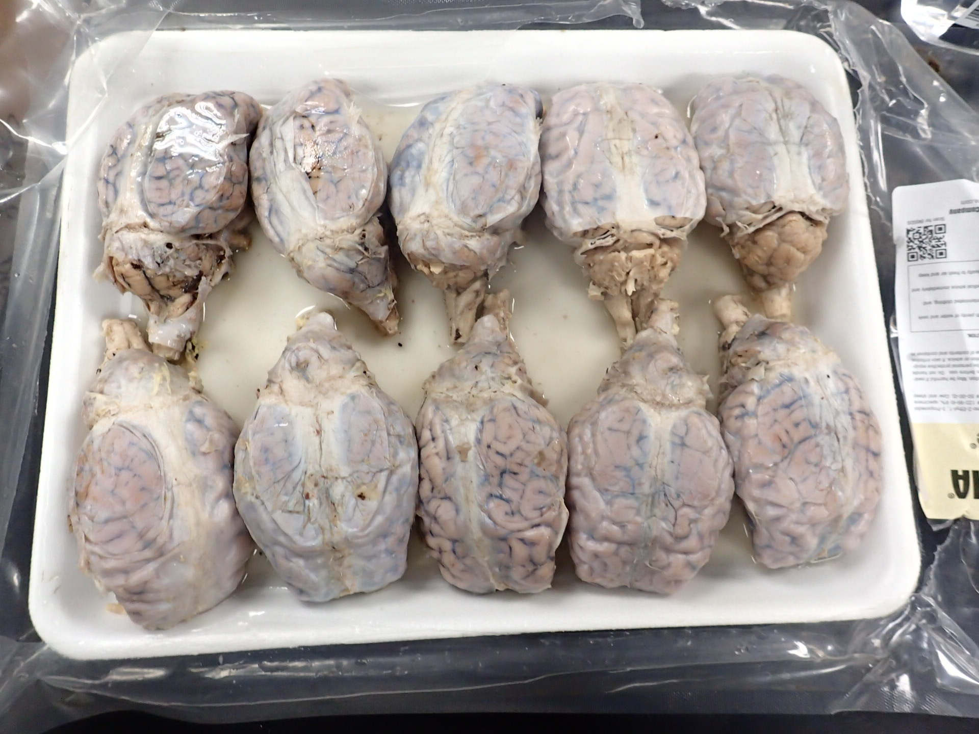Packaged Brains