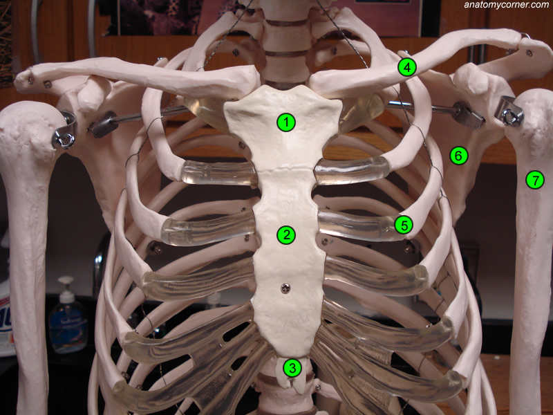 Anatomy of search