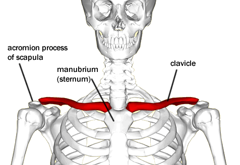 point where scapula and clavicle connect