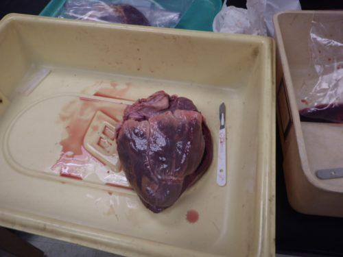 elk_heart (20)