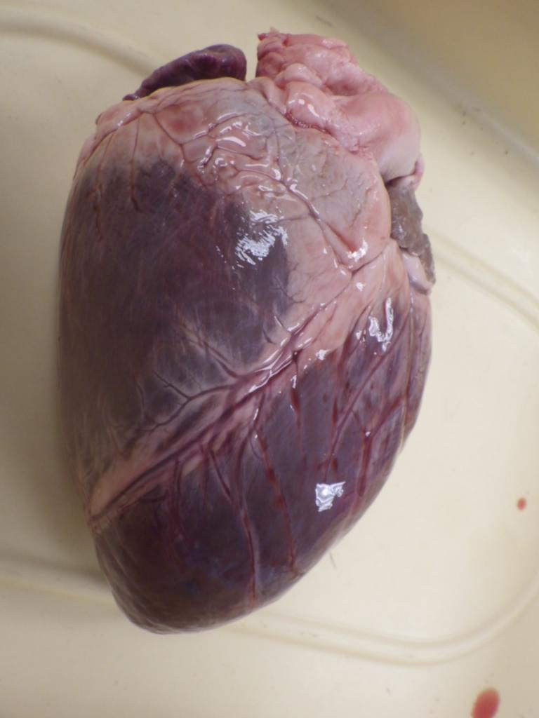 anatomy physiology digestive system essay