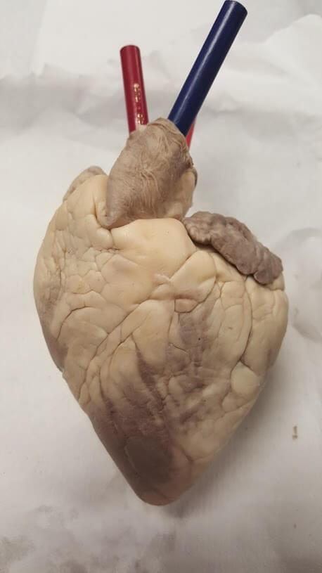 heart-external