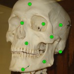 skull_anterior