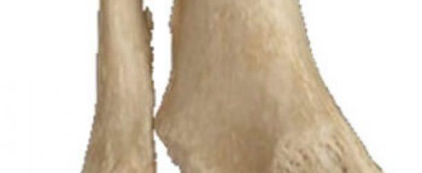 tibia-fibula-malleolus