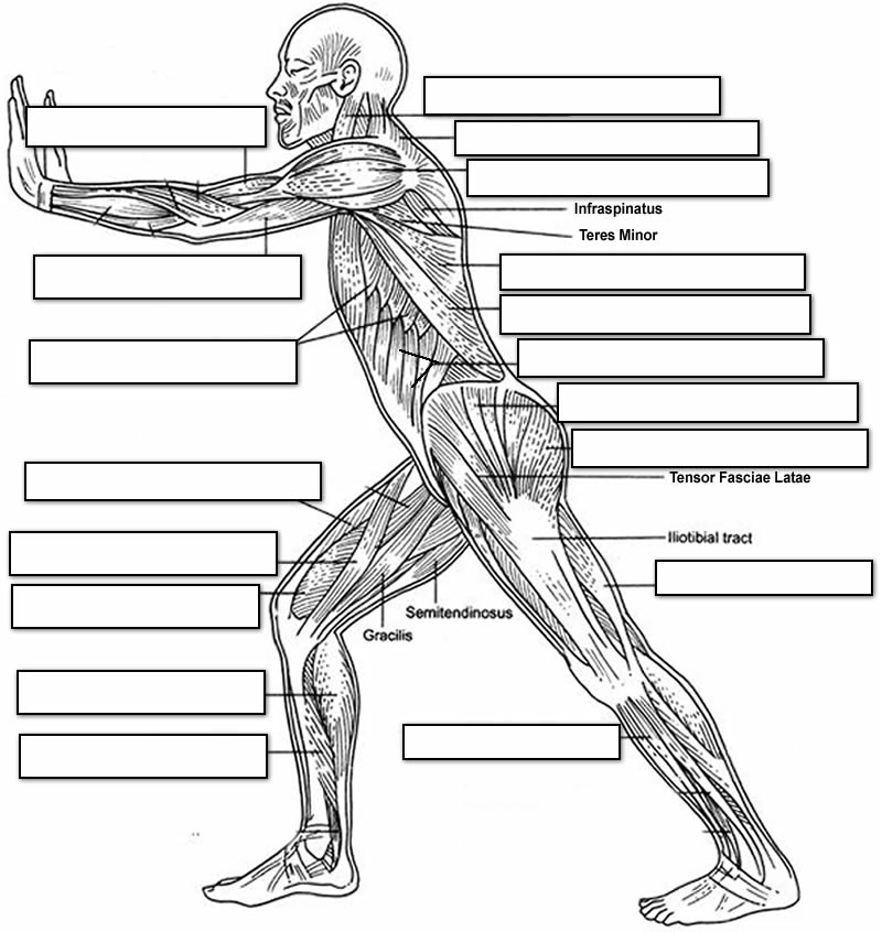 Anatomycorner Anatomy Resources For Teachers And Students A
